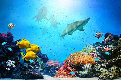 Egypt Photograph - Underwater Scene by Michal Bednarek