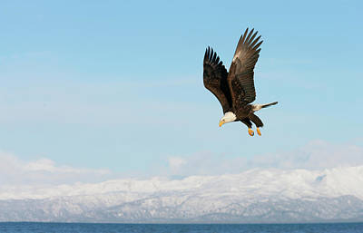 Homer Photograph - Usa, Alaska, Homer by Jaynes Gallery