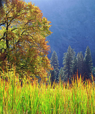 Usa, California, Yosemite National Park Art Print