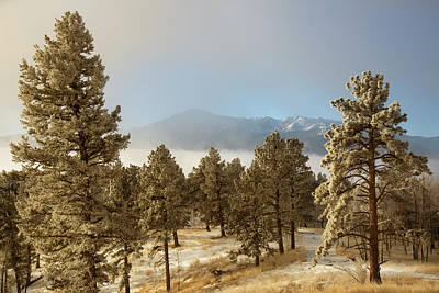 Usa, Colorado, Pike National Forest Art Print by Jaynes Gallery