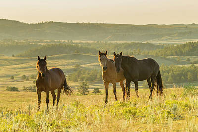 Usa, South Dakota, Wild Horse Sanctuary Art Print by Jaynes Gallery