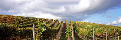 Winemaking Photograph - Vineyard, Napa Valley, California, Usa by Panoramic Images