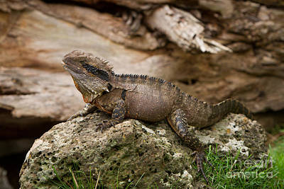 Photograph - Water Dragon by Craig Dingle