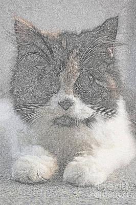 Cats Original