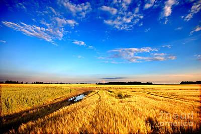 Harvest Photograph - Wheat Field  by Michal Bednarek