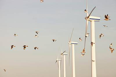 Herring Gull Photograph - Wind Turbine In Workington by Ashley Cooper