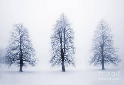 Winter Trees In Fog Print by Elena Elisseeva
