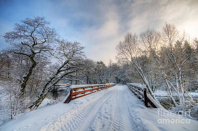 January Photograph - Winter White Forest by Michal Bednarek