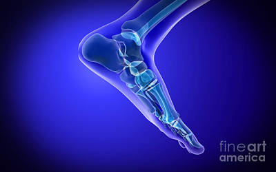 Human Joint Digital Art - X-ray View Of Human Foot by Stocktrek Images