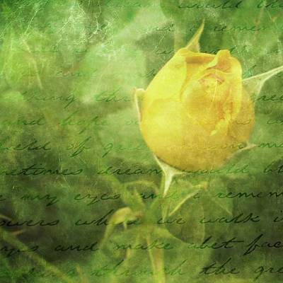 Yellow Rose Art Print by Cathie Tyler