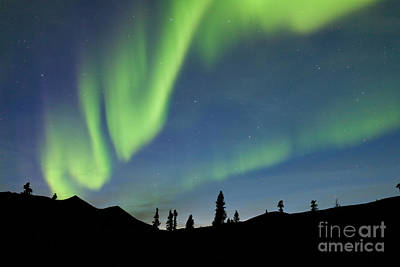 Surrealism Royalty-Free and Rights-Managed Images - Yukon taiga spruce Northern Lights Aurora borealis by Stephan Pietzko
