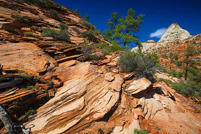 Photograph - Zion National Park Utah Usa  by Richard Wiggins