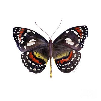White Background Painting - 50 Elzunia Bonplandii Butterfly by Amy Kirkpatrick