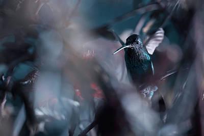 Hummingbird Wall Art - Photograph - 50 Hz by Fabien Bravin