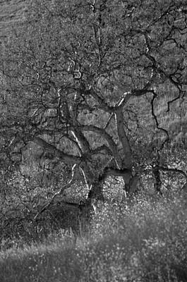 Photograph - 50 Shades Of Gray Trees by Deprise Brescia