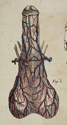 Anatomical Drawing Art Print by British Library