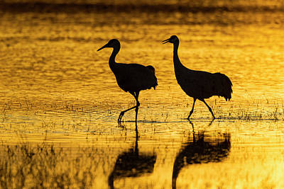 Usa, New Mexico, Bosque Del Apache Art Print