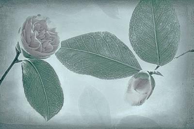 Usa, Washington State, Seabeck Art Print