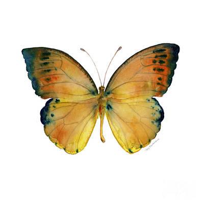 White Background Painting - 53 Leucippe Detanii Butterfly by Amy Kirkpatrick