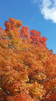 Nature Photograph - Fall Explosion Of Color by Kenny Glover