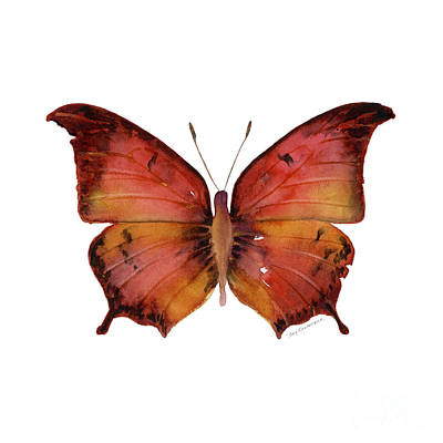 Animals Paintings - 58 Andria Butterfly by Amy Kirkpatrick