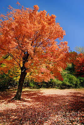 A Blanket Of Fall Colors Art Print by Amy Cicconi