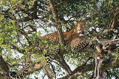 Leopard Cat Photograph - Africa, Kenya, Masai Mara National by Emily Wilson