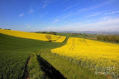 Dirt Roads Photograph - Agricultural Landscape. Auvergne. France. by Bernard Jaubert