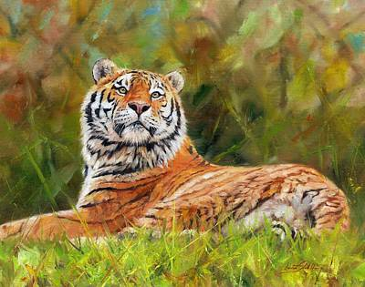 Feline Painting - Amur Tiger by David Stribbling