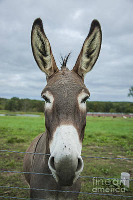 Animal Personalities Friendly Quirky Donkey Face Close Up Art Print by Jani Bryson