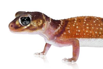 Australian Reptiles On White Art Print by Shannon Benson