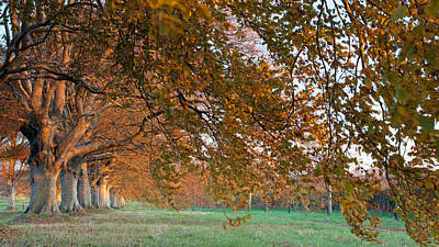 Old Country Roads Photograph - Autumn Colours by Ollie Taylor