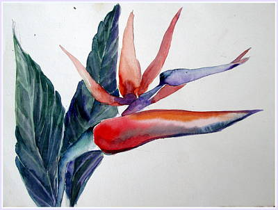 Florida Flowers Drawing - Bird Of Paradise by Mindy Newman