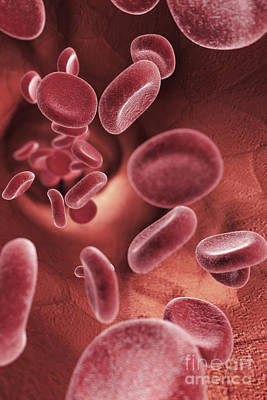 Photograph - Bloodstream by Science Picture Co
