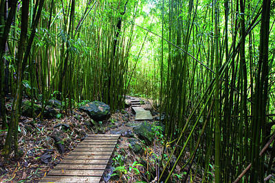 Photograph - Boardwalk Passing Through Bamboo Trees by Panoramic Images
