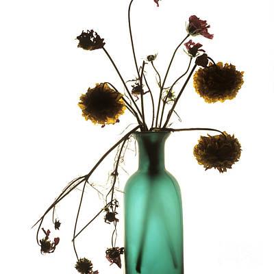 Viburnum Photograph - Bouquet by Bernard Jaubert