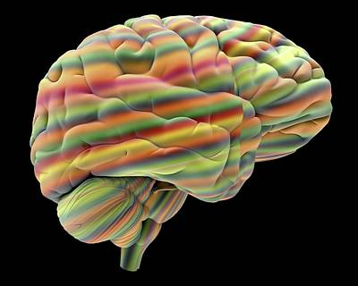 Abstract Human Body Photograph - Brain by Alfred Pasieka