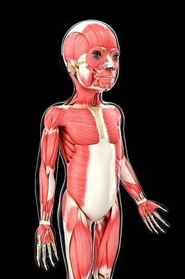 Child's Muscular System Art Print by Pixologicstudio