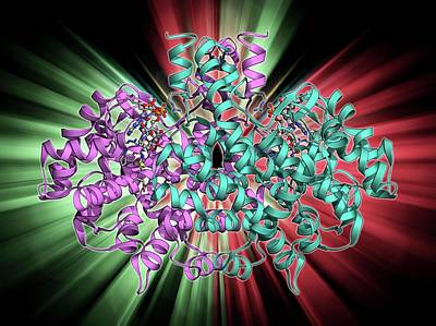 Citrate Synthase Molecule Art Print by Laguna Design
