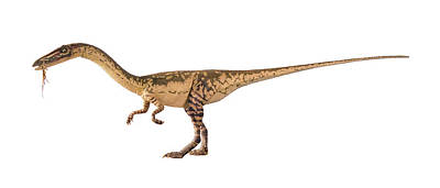 Coelophysis Dinosaur Model Art Print by Natural History Museum, London/science Photo Library