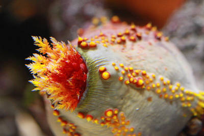 Wild Photograph - Corals by Tinjoe Mbugus