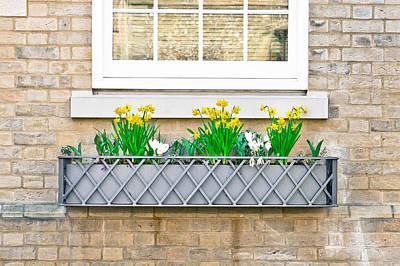 Daffodils Print by Tom Gowanlock