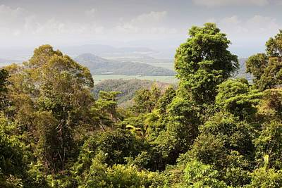 Daintree Rainforest Print by Ashley Cooper