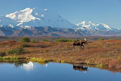 Denali National Park, Alaska, Mt Art Print by Hugh Rose