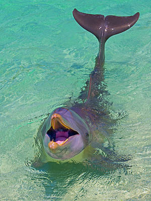 Dolphin In The Ocean, Roatan Island Art Print by Keren Su