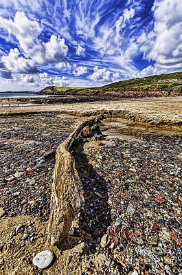 Photograph - Driftwood by Steve Purnell