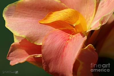 Dwarf Canna Lily Named Corsica Art Print by J McCombie