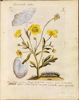 Erucarum Ortus Art Print