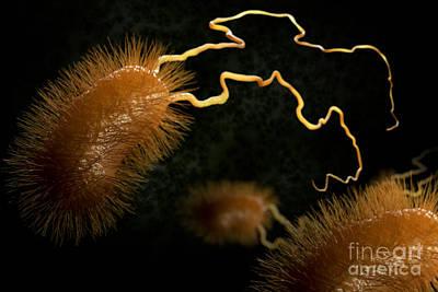 Pathogenic Bacteria Photograph - Escherichia Coli Bacteria by Science Picture Co