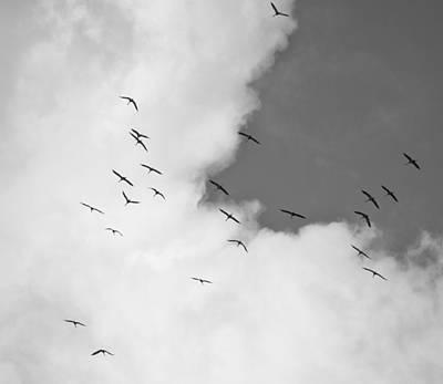 Eurasian Cranes Print by Jouko Lehto